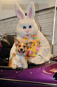 Photo by Carl Hess. Photos with the Easter Bunny at Schaeffer's Harley-Davidson on April 19.