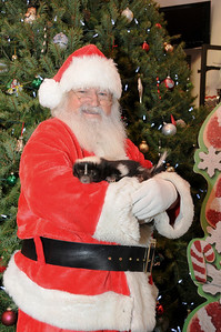 """It just wouldn't be """"Pictures with Santa"""" without Penelope, the most well known skunk in Schuylkill County stopping by for a visit."""